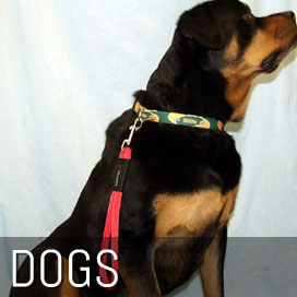Dog Leashes, Collars and Grooming Supplies