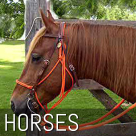 Horse Lead Ropes, Roping Reins & Trailer Ties
