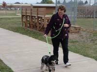 Dogs - Arthritic and Handicap Friendly Dog Leashes