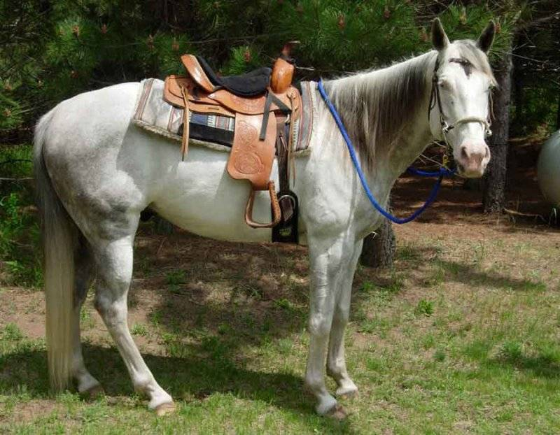 NRS Waxed Nylon Roping Reins 8 ft x 5//8 in