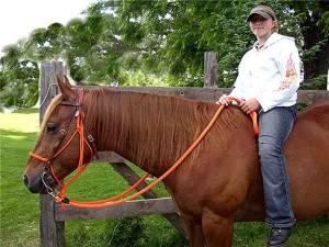 Horse split reins, horse split reins shown on horse