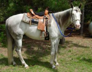 Soft Lines, Inc. - 8 ft. Horse Roping Reins 1/2 in. Round with Nickel Plated Hardware