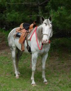 Soft Lines, Inc. - 6 ft. Horse Split Reins 1/2 in. Round with Nickel Plated Hardware