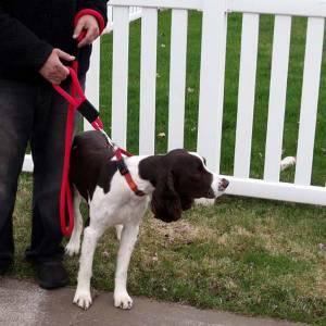 "Soft Lines, Inc. - 6 Foot Sidewalk Safety Dog Snap Leash 3/8"" Round Polypropylene"