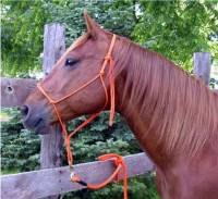 Horse lead ropes, horse lunge lines
