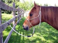 Horse trailer tie ropes, horse trailer tie ropes shown with horse