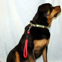 4 Ft Dog Snap Leash/Snap Lead - 1/2 Round on Dog