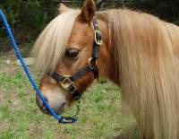 Horse - Miniature Horse and Pony Lead Ropes - Soft Lines, Inc. - 6 ft. Miniature Horse Lead Rope 3/8 in. Round with Nickel Plated Bolt Snap