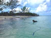Floating Swim Slip Leash with Snugger