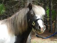 Horse - Miniature Horse and Pony Lead Ropes