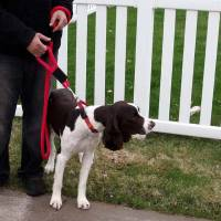 "Soft Lines, Inc. - 8 Foot Sidewalk Safety Dog Snap Leash 5/8"" Round Polypropylene - Image 3"