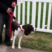 Safety Dog Leashes