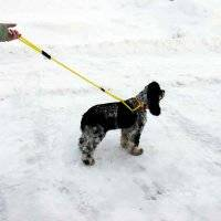 Dog Harness Walker