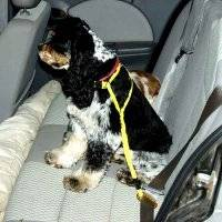 Auto-Restraint Dog Harness Walker
